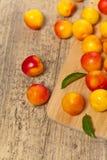 Cerise-prune Photographie stock