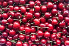 Cerise rouge Photo stock