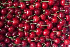Cerise rouge Photos stock