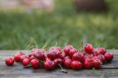 Cerise rouge Image libre de droits