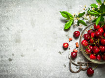Cerise rouge dans l'outil de tasse et en métal pour des cerises Images stock