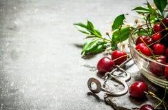 Cerise rouge dans l'outil de tasse et en métal pour des cerises Photos stock
