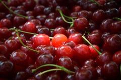 Cerise rouge douce Photo stock
