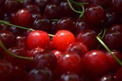 Cerise rouge douce Photos stock