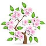 Cerise tree Royalty Free Stock Photos