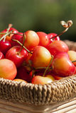 Cerises blanches Image stock