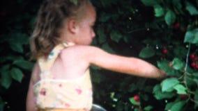 cerises de cueillette de fille (de film de 8mm) de Bush 1958 clips vidéos
