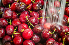 Cerises de lavage Photo stock