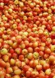 Cerises de Ranier sur un marché de fruit image stock