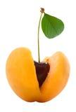 Cerises en abricot Photographie stock libre de droits