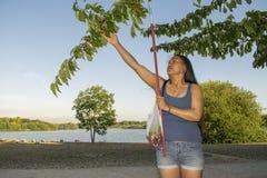 Cerises femelles asiatiques de cueillette un jour d'étés Images stock