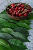 Cerises fraîches douces avec les feuilles vertes sur le bois rustique bleu Photo libre de droits