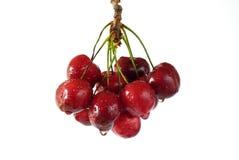 Cerises rouges Images stock