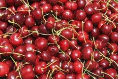 Cerises rouges Photo stock