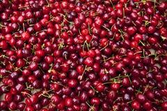 Cerises rouges Photographie stock libre de droits