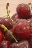 Cerises rouges Photographie stock