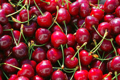 Cerises rouges Photo libre de droits