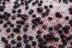 cerises sèches dans un dessiccateur de déshydrateur Une manière de préserver des vitamines photo stock