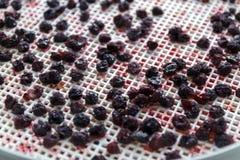 cerises sèches dans un dessiccateur de déshydrateur Une manière de préserver des vitamines photographie stock