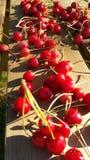 Cerises séchant en soleil Photos libres de droits