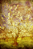 Cerisier photographie stock
