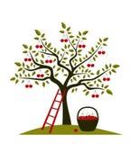 Cerisier Photographie stock libre de droits
