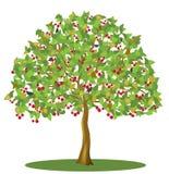 Cerisier avec des baies et des oiseaux Photo stock