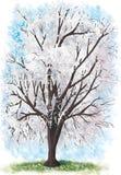 Cerisier dans la fleur Photos libres de droits