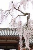 Cerisier de floraison à Nara photographie stock