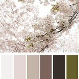 Cerisier de floraison Photographie stock