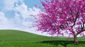 Cerisier de floraison de Sakura avec les pétales en baisse 4K illustration libre de droits