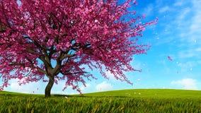 Cerisier de Sakura dans la pleine fleur à la journée de printemps clips vidéos