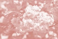 Cerisier en fleur image stock