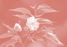 Cerisier en fleur photographie stock libre de droits