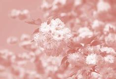Cerisier en fleur image libre de droits