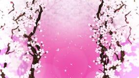 Cerisier en pleine floraison Branchement de cerise Sakura fleurit rose Fond de rose de fleurs de cerisier Animation de boucle de  illustration de vecteur
