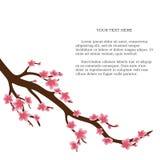 Cerisier japonais sur un fond blanc Images stock