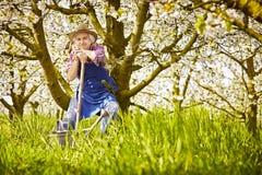 Cerisier, tronc d'arbre de pelle de jardinier Images stock