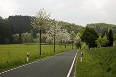 Cerisiers au printemps, l'Allemagne Photos stock