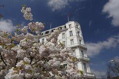 Cerisiers de floraison à Amsterdam image libre de droits