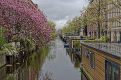 Cerisiers fleurissant à Amsterdam photos libres de droits