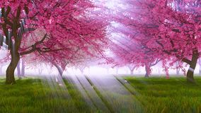 Cerisiers roses de Sakura dans le mouvement lent 4K de fleur clips vidéos