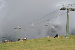 Cermis: Chair Lift and cows in clouds Royalty Free Stock Image