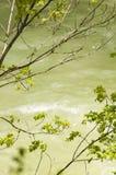 cerna över flodtrees Arkivbilder
