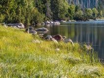 Cerne Jezero - parc national de Sumava, République Tchèque Images stock