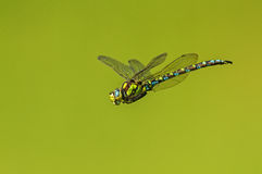Cernido en el planeta verde fotos de archivo libres de regalías
