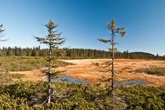 Cernohorske raseliniste upland moor in Krkonose mountains Royalty Free Stock Images