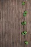 Ceropegia Woodii on ebony wood texture Stock Images