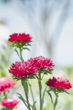 Cerrado encima de la flor roja Fotografía de archivo