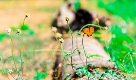 Cerrado encima de mariposa en la flor Foto de archivo libre de regalías